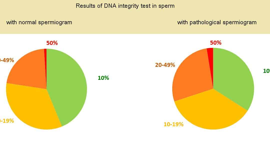 Why is it important to investigate DNA integrity in sperm?